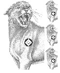 Big Game - Mountain Lion - 23x29